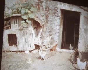 Även i Italien är förfallet stort bland gamla byggnader. Djur och natur tar över. Lars ville köpa men fick nej